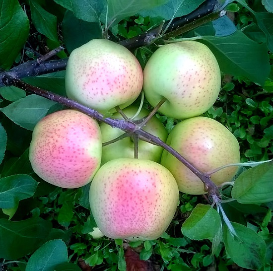 Rau củ quả, đồ ăn đẹp hoàn hảo đến mê hoặc - 6