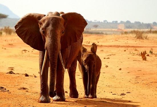 10 điều người ta hay lầm tưởng về châu Phi - 5