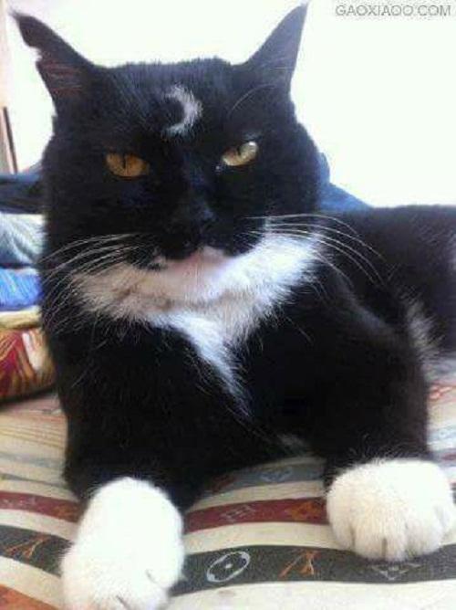 Thủy thủ mặt mèo.
