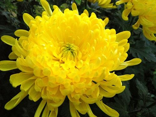 Những loại cây và hoa giúp phát tài phát lộc năm 2018 theo phong thủy - 4