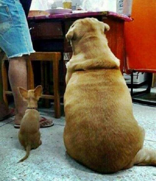 Cặp đôi hoàn cảnh.