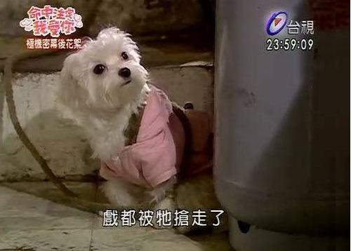 Năm Tuất, điểm danh những chú chó nổi tiếng trong phim Hoa ngữ