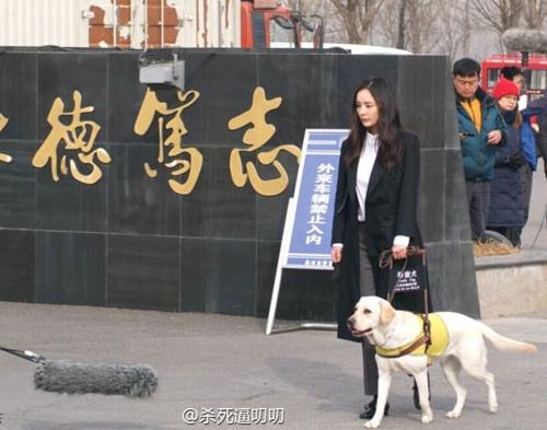 Năm Tuất, điểm danh những chú chó nổi tiếng trong phim Hoa ngữ - 3