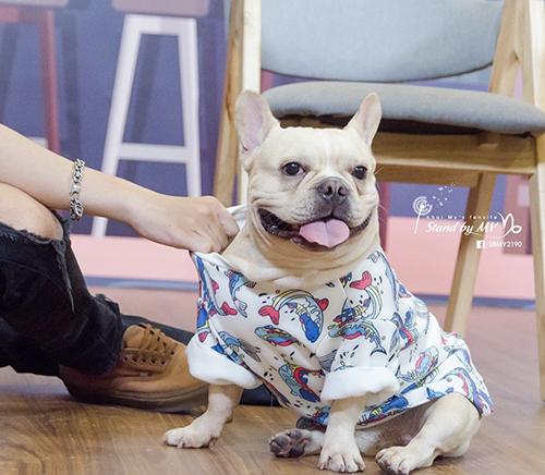 Chú cún cưng được Khởi My - Kelvin Khánh yêu thương như con - 2