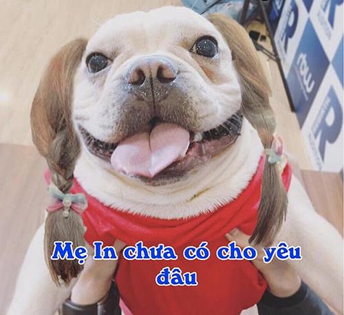 Chú cún cưng được Khởi My - Kelvin Khánh yêu thương như con - 8