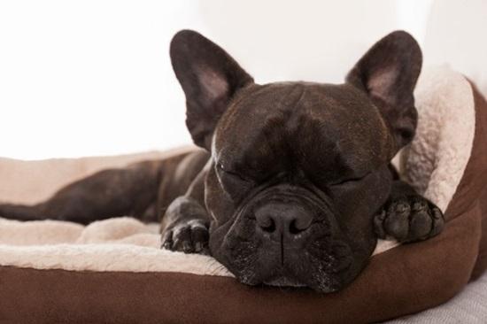 Cẩm nang chọn cún cưng theo sở thích - 4