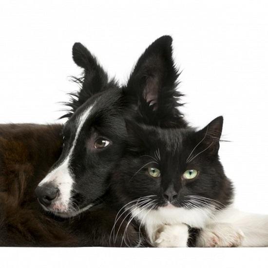 Cẩm nang chọn cún cưng theo sở thích - 7