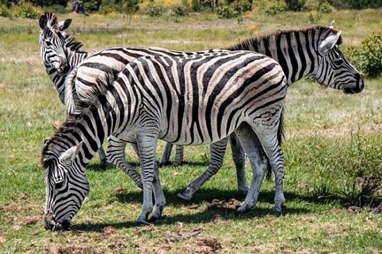 Những điều lý thú về các loài vật mà sách giáo khoa cũng không dạy bạn - 3
