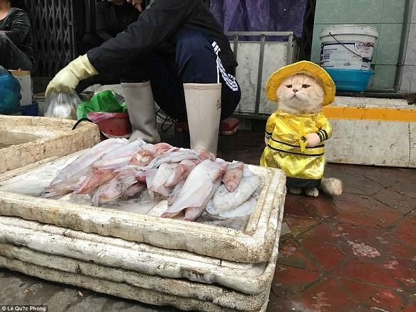 Hình ảnh chú mèo Việt Namđược tạp chí BoredPanda đăng tải.