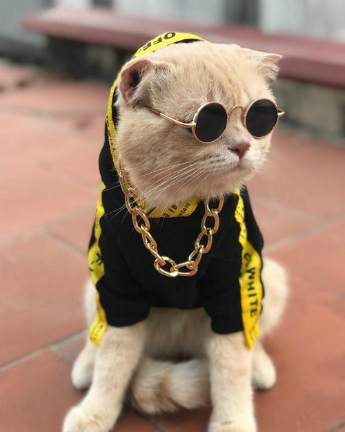 Chú mèo mặt ngầu nhất vịnh Bắc bộ được lên tạp chí quốc tế - 5