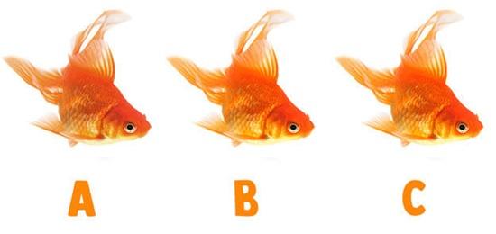 Nhanh mắt phân biệt hình có màu sắc khác biệt - 6
