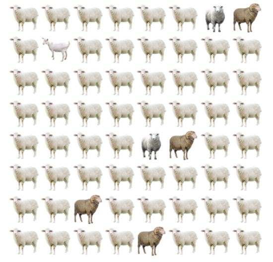 30 giây bạn có tìm ra điểm khác biệt giữa bầy cừu - 9