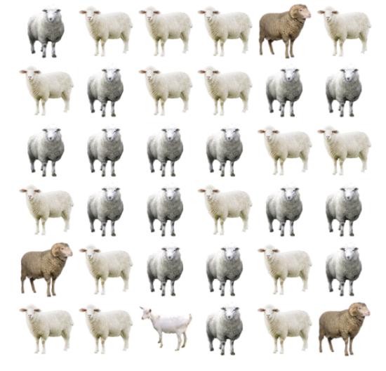 30 giây bạn có tìm ra điểm khác biệt giữa bầy cừu - 2