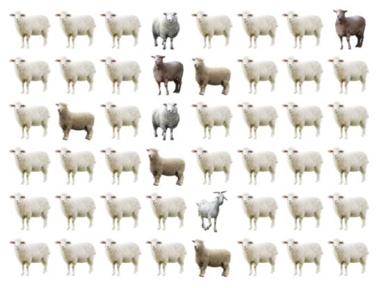 30 giây bạn có tìm ra điểm khác biệt giữa bầy cừu - 3