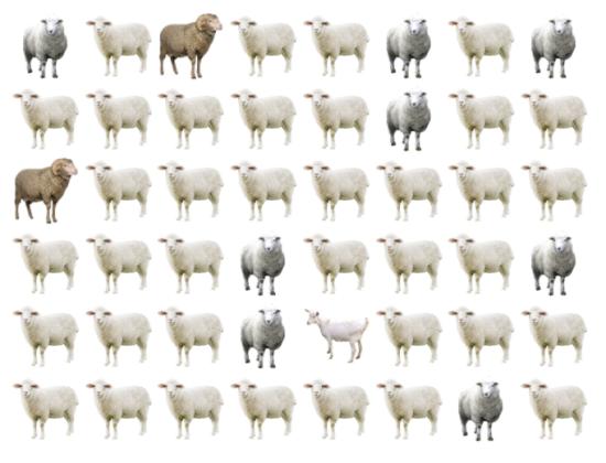 30 giây bạn có tìm ra điểm khác biệt giữa bầy cừu - 4