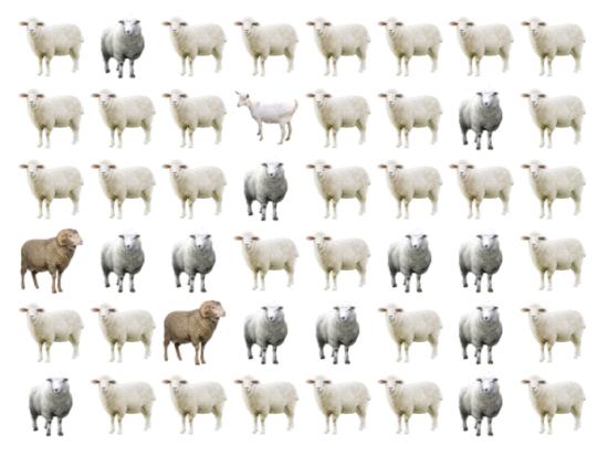 30 giây bạn có tìm ra điểm khác biệt giữa bầy cừu - 5