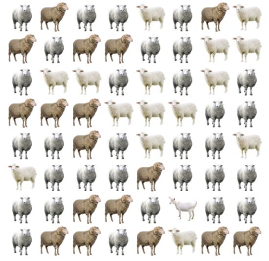 30 giây bạn có tìm ra điểm khác biệt giữa bầy cừu - 8