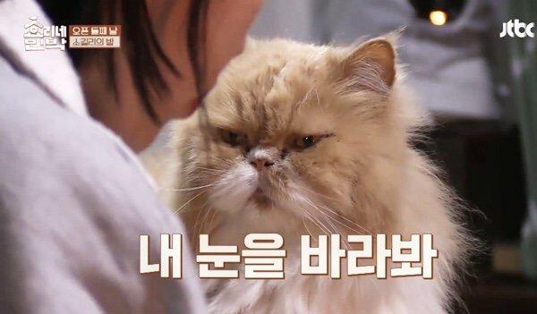 Mèo mặt khó ở là nhân vật quyền lực tại ngôi nhà Hyoris Homestay