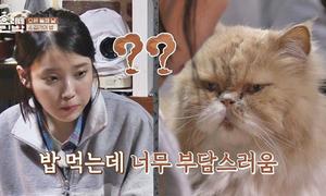 Chú mèo 'mặt khó ở' là nhân vật quyền lực tại ngôi nhà 'Hyori's Homestay'