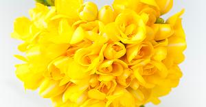 Trắc nghiệm: Loài hoa ưa thích tương ứng với phẩm chất nào của bạn? - 2