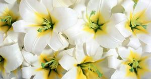 Trắc nghiệm: Loài hoa ưa thích tương ứng với phẩm chất nào của bạn? - 3