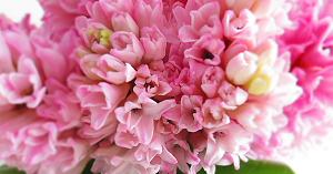 Trắc nghiệm: Loài hoa ưa thích tương ứng với phẩm chất nào của bạn? - 5
