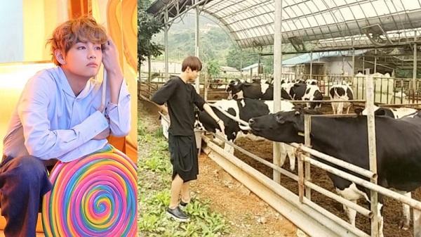 Những idol có thể làm nông dân nếu không thành ca sĩ