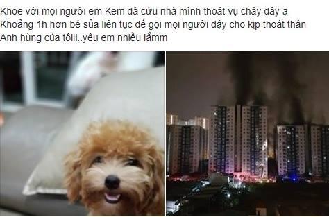 Nhiều người khoe cún cưng thông minh trong đám cháy lớn.
