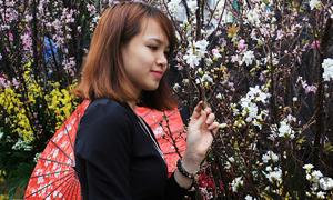 Giới trẻ Hà thành đổ xô 'sống ảo' cùng hoa anh đào Nhật Bản