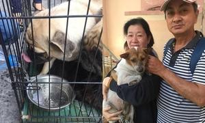 Nhóm bạn trẻ giải cứu chó cưng tại chung cư Sài Gòn sau vụ cháy lớn
