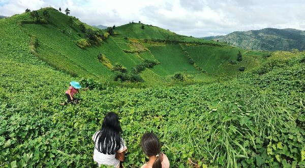 Những điểm sống ảo mùa hè ở chốn núi rừng Gia Lai - 10