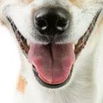 Đố bạn xếp chuẩn khuôn mặt cho chú cún siêu xinh này - 7