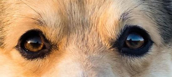 Đố bạn xếp chuẩn khuôn mặt cho chú cún siêu xinh này - 4