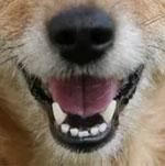 Đố bạn xếp chuẩn khuôn mặt cho chú cún siêu xinh này - 19