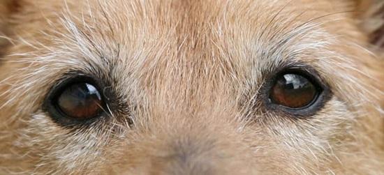 Đố bạn xếp chuẩn khuôn mặt cho chú cún siêu xinh này - 16