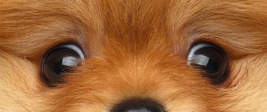 Đố bạn xếp chuẩn khuôn mặt cho chú cún siêu xinh này - 24