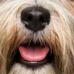 Đố bạn xếp chuẩn khuôn mặt cho chú cún siêu xinh này - 31