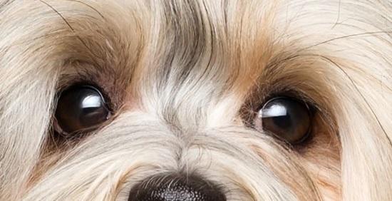 Đố bạn xếp chuẩn khuôn mặt cho chú cún siêu xinh này - 28