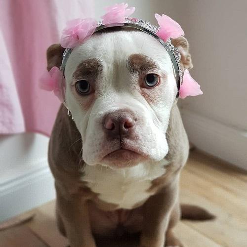 Nàng chó có gương mặt sầu đời nhất mạng xã hội - 2
