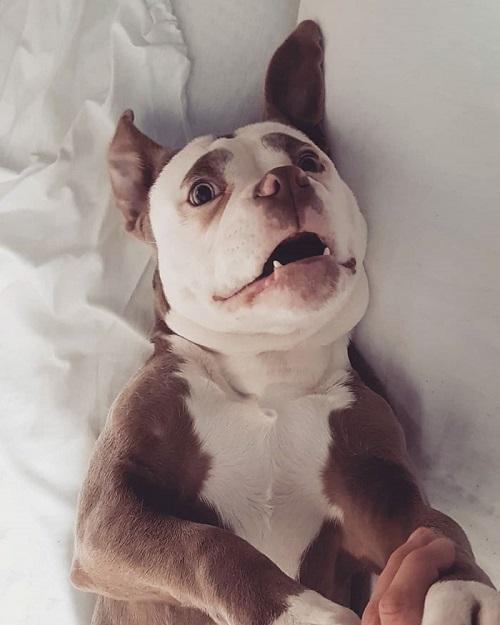 Nàng chó có gương mặt sầu đời nhất mạng xã hội - page 2 - 4