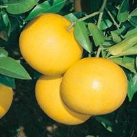 Bạn hiểu gì về các loại hoa quả? - 2