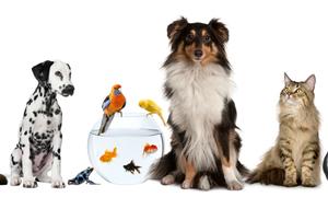 Trắc nghiệm: Bạn muốn trở thành loại động vật nào dưới đây?