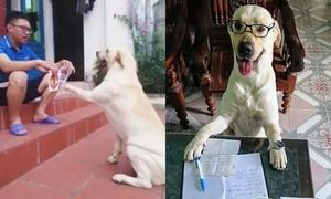 Chú chó tên Trịnh Văn Củ Cải biết làm toán, nhớ tên đội bóng
