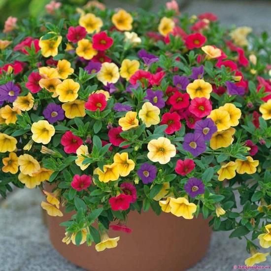 Loài hoa này tên là gì?