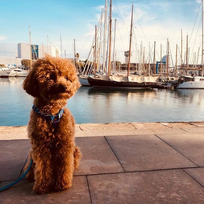 <p> Mới đây, nhiều người xôn xao về một chú cún đáng yêu trên Instagram.</p>