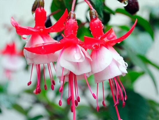 Loài hoa này tên là gì? - 2