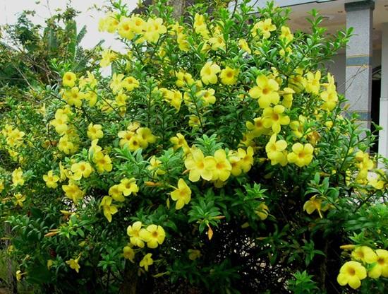 Loài hoa này tên là gì? - 3