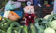 Chú mèo tên Chó lại 'gây sốt' khi hóa siêu anh hùng đi bán rau
