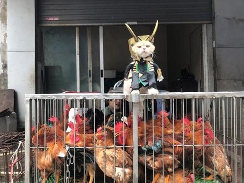 Nhân vật phản diện Loki trong phim cũng chẳng còn đáng sợ nữa khi được Chó hóa thân với hai chiếc sừng trên đầu đứng bán gà ngoài chợ.