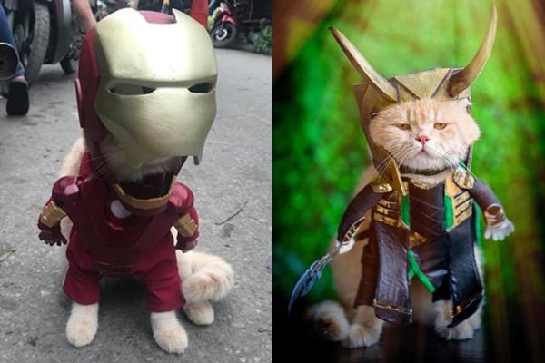 Tất cả những hình ảnh mới nhất của chú mèo tên Chó khiến nhiều người không thể không bật ra câu đáng yêu quá.